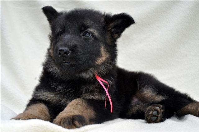 aanschaf van een puppy begeleiding