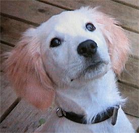 Puppycursus Breda