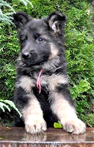 Puppytraining Breda